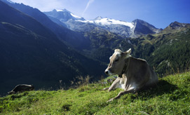 Alpine Summer in the Zillertal